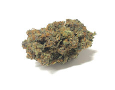 california-haze-weed-cannabis-sativa