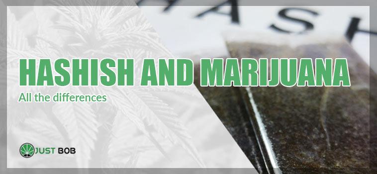 all the differences hashish and marijuana