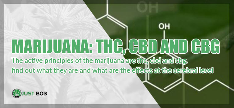marijuana thc cbd cgb