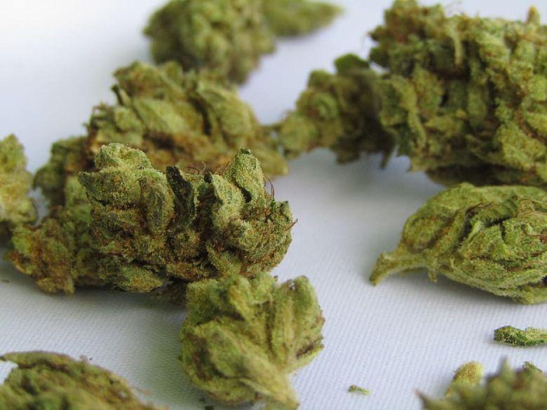 CBD buds herbal tea for cannabis light lovers