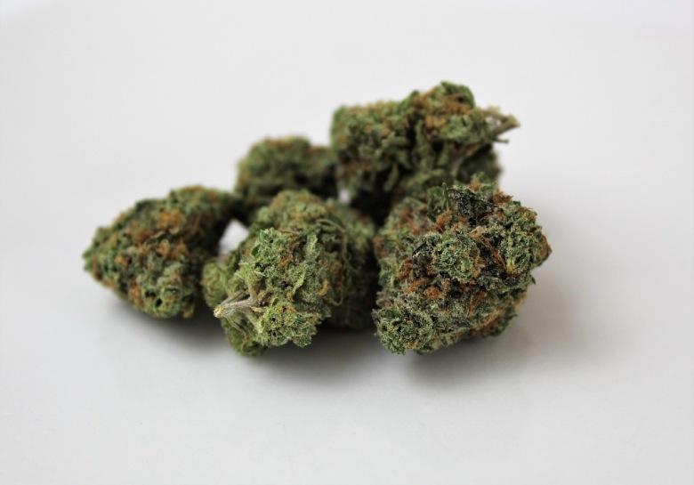 Cheese marijuana variety