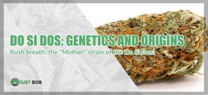 Do Si Dos cannabis light genetics and origins