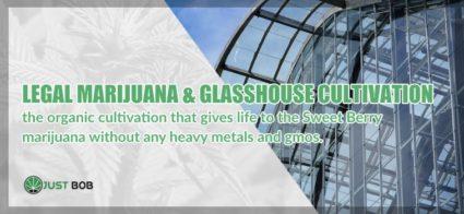 Legal marijuana cbd and GlassHouse cultivation