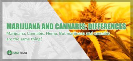 Marijuana and cannabis cbd differences