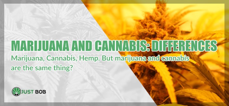Marijuana and cannabis cbd differences