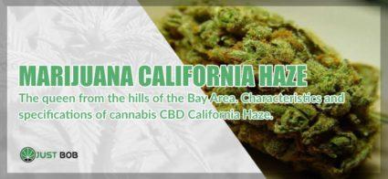 Marijuana light California Haze