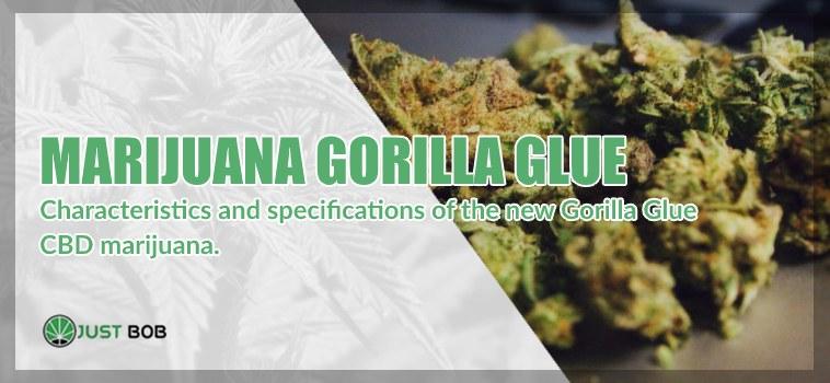 Marijuana light Gorilla Glue