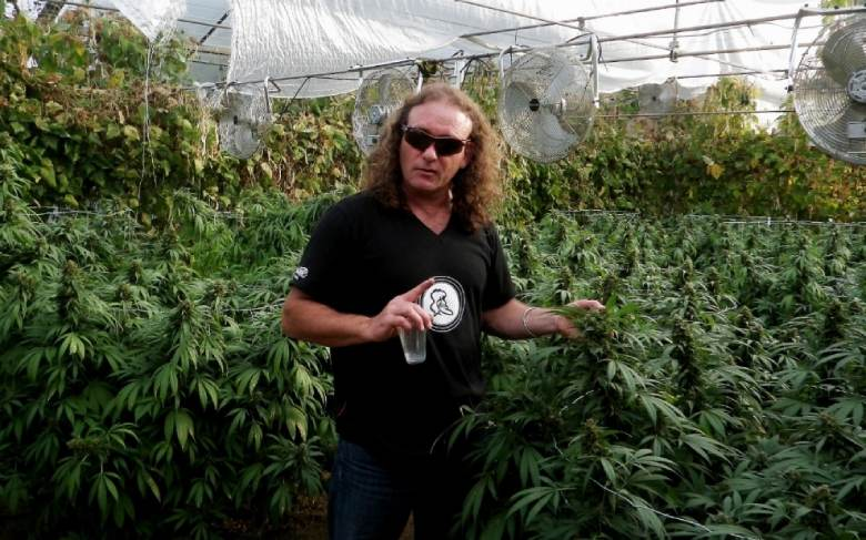 Shantibaba the possible father of white widow marijuana light