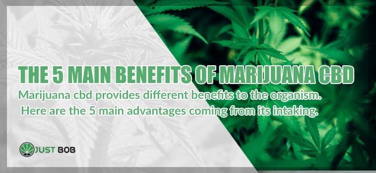 The 5 main benefits of marijuana CBD