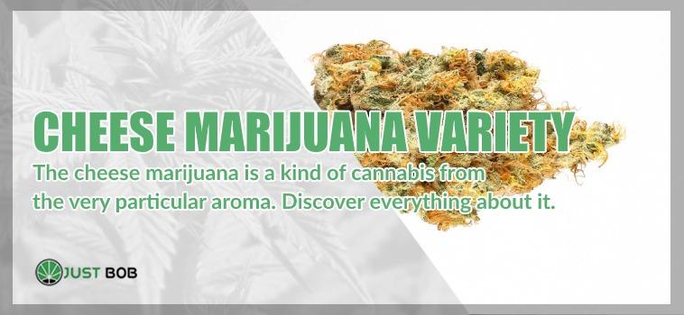 cheese marihuana light variety