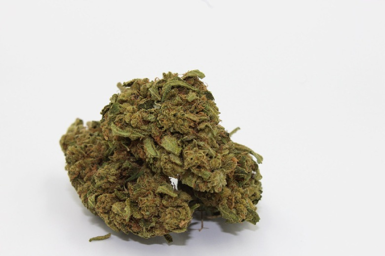 legal CBD marijuana gorilla glue bud