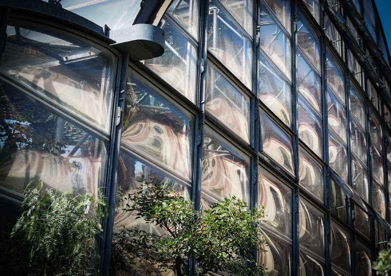 marijuana cbd glasshouse windows