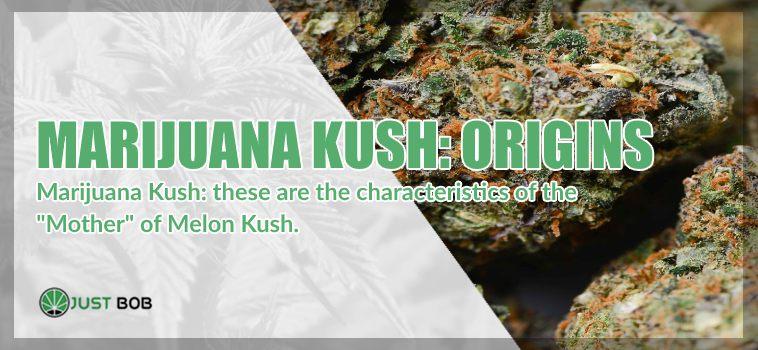 origins of legal marijuana melon kush