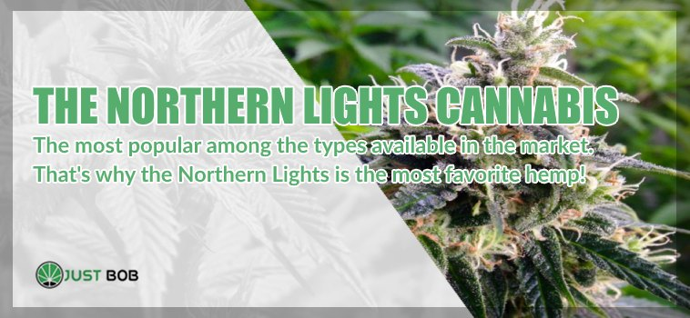 the Northern Lights cannabis