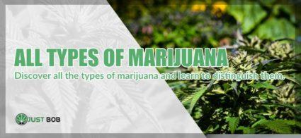 types of marihuana cbd