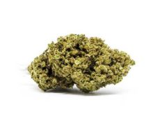 master kush cbd flowers cannabis light
