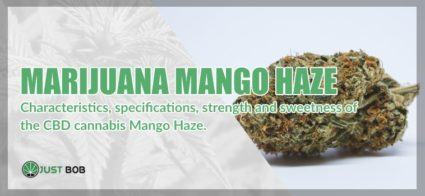 Marijuana light Mango Haze