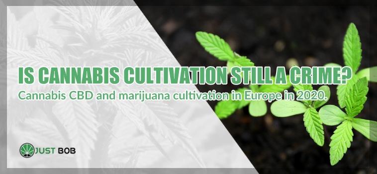 legal hemp home cultivation